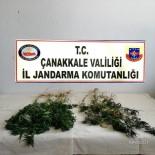 KARABIGA - Çanakkale'de Uyuşturucu Operasyonu Açıklaması 1 Gözaltı