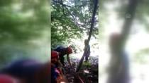 Ağaçtan Düşerek Mahsur Kalan Kişi Kurtarıldı