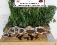 Sakarya'da Jandarmadan Esrar Ve Kenevir Operasyonu Açıklaması 2 Gözaltı