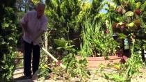 Çöplüğü 22 Yıllık Emekle Botanik Bahçesine Çevirdiler