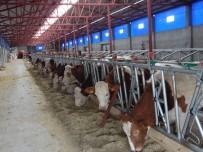 Devlet Desteğiyle Çiftlik Kurdu, 5 Kişiye İstihdam Sağladı