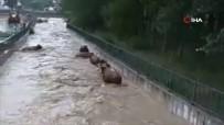 Hayvanlar Sele Kapıldı