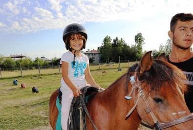 At çiftliğine yoğun ilgi