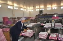 Yumurta Üreticileri Sıkıntıda