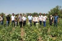 SEBZE ÜRETİMİ - Antalyalı Çiftçilerden Gevaş'a Ziyaret