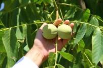Bingöl'de Ceviz Üretiminde Pilot Bahçeler İncelendi