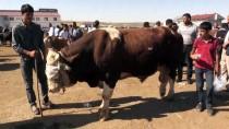 Bir Tonluk 'Poyraz' 15 Bin Liraya Alıcı Bekliyor