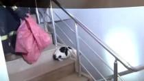 Çatıda Mahsur Kalan Hamile Kedi Kurtarıldı