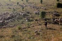 Dere Yatağında Sıkışan 265 Koyun Telef Oldu