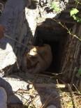 Kuyuya Düşen Hayvanlar Kurtarıldı