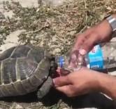 Polis Memurundan Kaplumbağaya Şefkat Eli