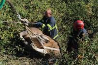 KURBANLIK HAYVAN - 7 Saat Süren Kaçak Kurbanlık Kovalamacası, Hayvanın Bayılmasıyla Son Buldu