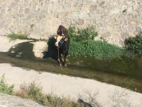 KURBANLIK HAYVAN - Ataşehir'de Sahibinin Elinden Kaçan Kurbanlık Hayvan Derede Mahsur Kaldı