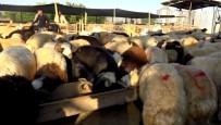 Bingöl'de Kurban Pazarı Ve Çarşıda Son Gün Yoğunluğu