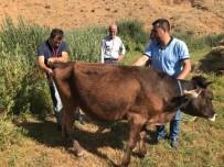 Yüksekova'da Büyükbaş Ve Küçükbaş Hayvanlarda Hastalık Taraması