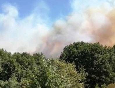 Pendik'te orman yangını!
