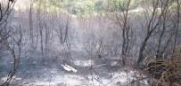 MUSTAFA CAN - Biga'daki Orman Yangını Kontrol Altına Alındı