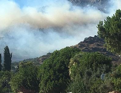 Marmara Adası'nda büyük yangın!