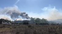 Ormanlık Yangını Fabrikaya Sıçradı