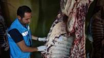 Tokat'ta 20 Kurbanda Bulaşıcı Hastalık Tespit Edildi