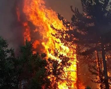 Kütahya'daki Orman Yangınını Söndürme Çalışmaları Sürüyor