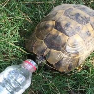 Sıcaktan Bunalan Kaplumbağaya Su İçirdi