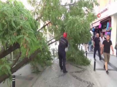 Silivri'de Yıkılan Ağaç Caddeyi Trafiğe Kapattı