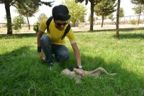 AMELİYATHANE - Diyarbakırlı Vatandaşlardan Hayvan Bakımevi Ve Rehabilitasyon Merkezi'ne Ziyaret