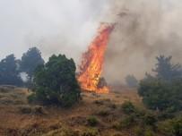 İŞ MAKİNESİ - Kahramanmaraş'ta Orman Yangını