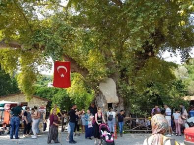 'Musa Ağacı' Turizmi