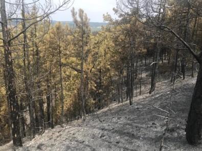 Yangının Tahribatı Gün Işığıyla Ortaya Çıktı