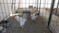 Burhaniye'de Çocuklar Ata Bindi Kümes Hayvanlarını Sevdi