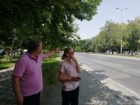 TRAFİK IŞIĞI - Mahallelinin 'Kaza' İsyanı