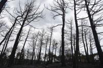 KIRAÇ - Eskişehir'deki Orman Yangınında Son Durum