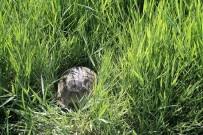 Minik Kaplumbağa Doğaya Bırakıldı