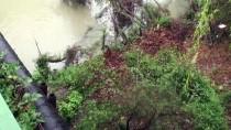 Bartın Irmağı'nda Balık Ölümleri
