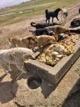 Gebze'de Artan Yemekler Sokak Hayvanlarına Gidiyor