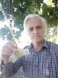 Kopardığı İncir İçin Ağaca Para Astı