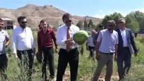 GAZİ KOŞUSU - Sivas'ta İlk Kez Karpuz Yetiştirildi