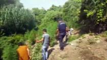 KıZıLDERE - Hint Keneviri Ekili Alan Drone İle Tespit Edildi