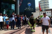 Kumluca'da Şampiyon Boğalar Görücüye Çıktı