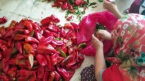 Çukurova'da Biber Salçası Hazırlığı
