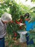 Sebzelerde İlaç Kalıntısı Denetimi
