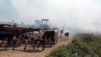 ANIZ YANGINI - Anız Yangınının Ortasında Mahsur Kaldılar