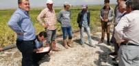 Niğde'de 20 Dekarlık Tarım Arazisi Doludan Zarar Gördü