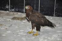 Yaban Hayvanları Kars'ta Şifa Buluyor