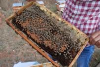 TARIM İLACI - Bakanlık Önlem Aldı, Arı Ölümleri Azaldı
