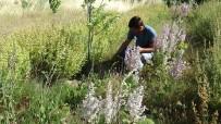 Eczacı Özler Açıklaması 'Kazdağları'ndaki Bitkilerin İyileştirici Gücü Çok Yüksek'