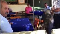 Kahvehanenin Davetsiz Misafirlerini Fıstık Ve Cipsle Beslediler