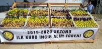 BEKIR KUVVET ERIM - Nazilli'de Sezonun İlk İnciri 250 TL'den Alıcı Buldu